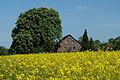 2015-05-10 2.3.2.36 Rosskastanien MendenerStr191 Mülheim-adR.jpg