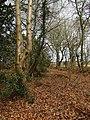 2018-04-16 Woodland walk near Felbrigg village, Cromer (3).JPG