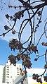 20200405 162019 Trees in Lodz.jpg