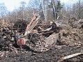 25 апреля 2010 года. Невская Дубровка. На этом снимке - свалка отходов на полях, рядом с местом строительства коттеджей. - panoramio.jpg