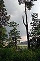 26.7.16 Purkarec to Hluboka nad Vltavou 62 (28288882860).jpg