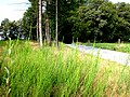 3.10 km Jakobsweg.jpg