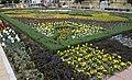 3424166 آستارا میزبان گل های لاله.jpg