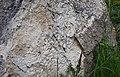 61-246-5002 останці рифів сарматського моря в кар'єрі.jpg