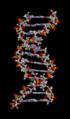 ADN animation frame 0001.png