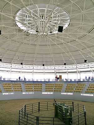 Australian Equine and Livestock Events Centre - Sale ring, AELEC, Tamworth, New South Wales