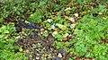 A Holsten Pils Production^ - geograph.org.uk - 1039008.jpg