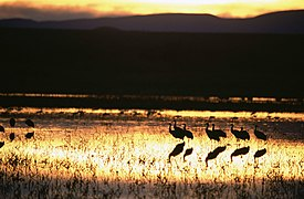 A beautiful sunset with bird silhouttes is captured.jpg