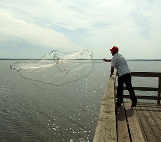 Cast net - Image: A fisherman casting a net
