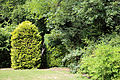 A gap through shrub hedge Gibberd Garden Essex England.JPG