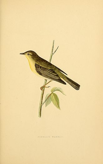 Franco Andrea Bonelli - Image: A history of the birds of Europe (Plate 50) (8157805947)