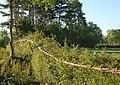 A laid hedge at Grandborough - geograph.org.uk - 1333151.jpg