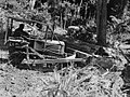 A man in a small bulldozer moving a large tree trunk surrounded by native bush (AM 77407-1).jpg