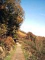 Abbeyford Woods - geograph.org.uk - 80111.jpg