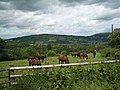 Above Llangynidr, grazing land, with horses - geograph.org.uk - 859035.jpg