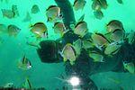 Acapulco (29119812300).jpg