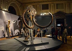 "Adams mammoth - The ""Adams mammoth"" on exhibit in Vienna"