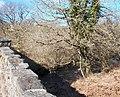 Afon Dwyfach from Pont Bryn-beddau - geograph.org.uk - 1765302.jpg