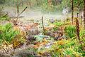 Aguas termales de la Cabaña.jpg