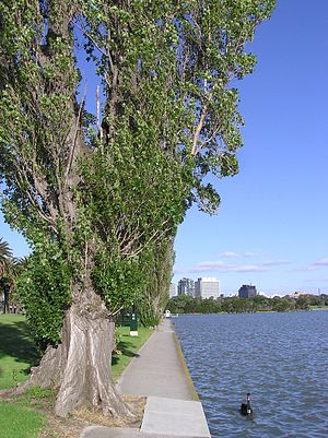 Albert Park and Lake - Image: Albert Park Lake & Swan