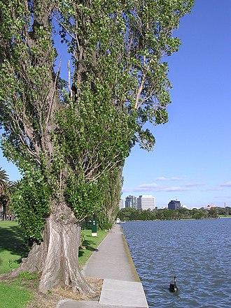 Albert Park and Lake - Image: Albert Park Lake & Swan