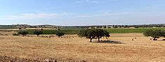Alentejo September 2013-1.jpg