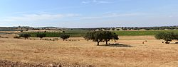 Typical landscape of the Alentejo. The trees in the foreground are cork oaks (Quercus suber), together with the remains of a cut wheat field. In second and third plan are vineyards (Vitis vinifera) and olive trees (Olea europea). Wheat, cork, olive oil and wine are the most publicized products of the Alentejo.