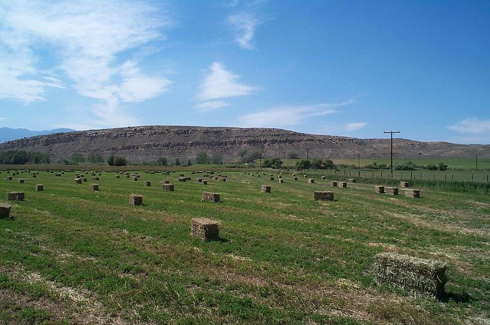 Alfalfa square bales