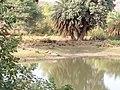 Aligator image01 - Van Vihar National Park.jpg