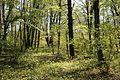 Allacher-Forst Muenchen-7.jpg