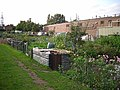 Allotments off Eastern Way - geograph.org.uk - 1437945.jpg