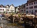 Alpabfahrt Mels. 2007-09-08 13-56-28.jpg