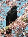 Also Flower Lover - Flickr - CharlesLam.jpg