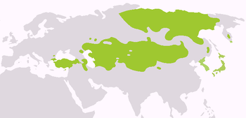 Η αλταϊκή γλωσσική οικογένεια