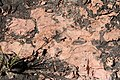 Alto Araguaia - State of Mato Grosso, Brazil - panoramio (290).jpg