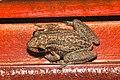 Amphibians (15578089096).jpg