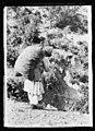 An Albanian peasant woman 05275v.jpg