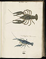 Animal drawings collected by Felix Platter, p1 - (165).jpg