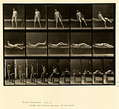 Animal locomotion. Plate 259 (Boston Public Library).jpg