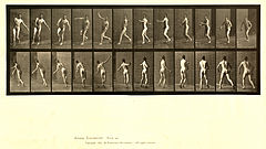 Animal locomotion. Plate 290 (Boston Public Library).jpg