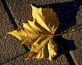 Another fallen one - Flickr - Stiller Beobachter.jpg