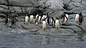 Antarctic, penguins (js) 14.jpg