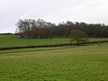 Anyone Seen the Hounds^ Pelsham Wood - geograph.org.uk - 335306.jpg