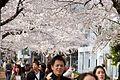Aoyama Cemetery (3455699255).jpg