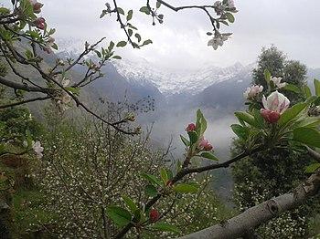 Apple flowering.jpg