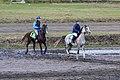 Arabian horses (6249319023).jpg