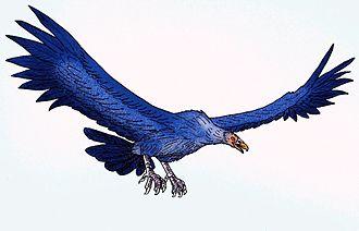 Argentavis - Reconstruction of A. magnificens