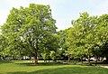 Arras Jardin de la Légion d'honneur R02.jpg