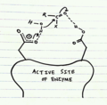 Aspartyl proteases.png