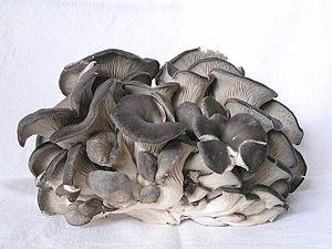 En klase ostronskivlingar